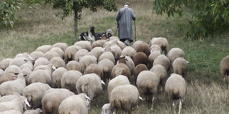 SHEPHERDS OF THE LORDS FLOCK
